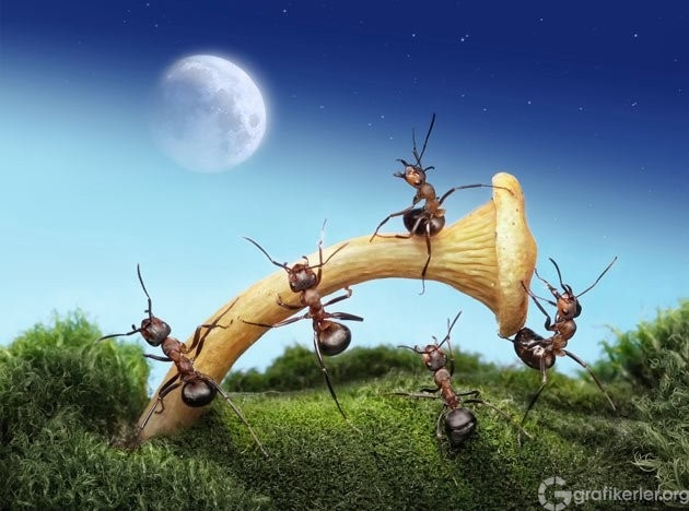 Fantasy-world-of-ants10
