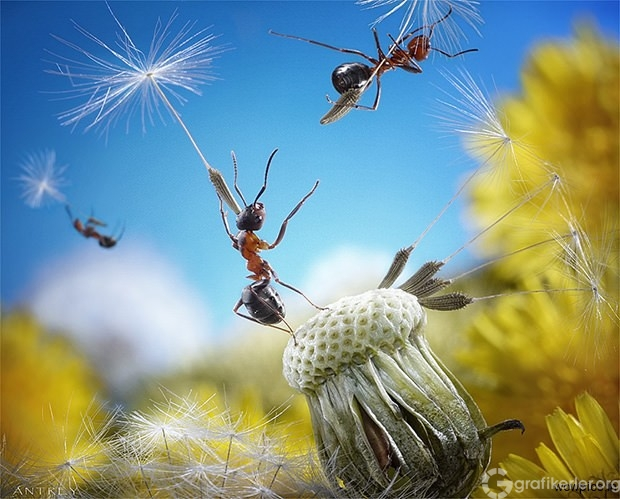 Fantasy-world-of-ants11