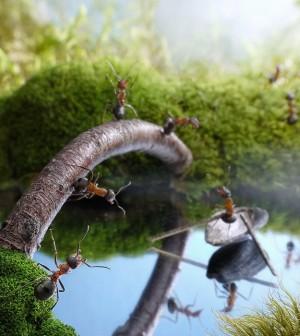 Fantasy-world-of-ants12