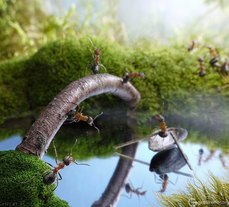 Fantasy-world-of-ants12