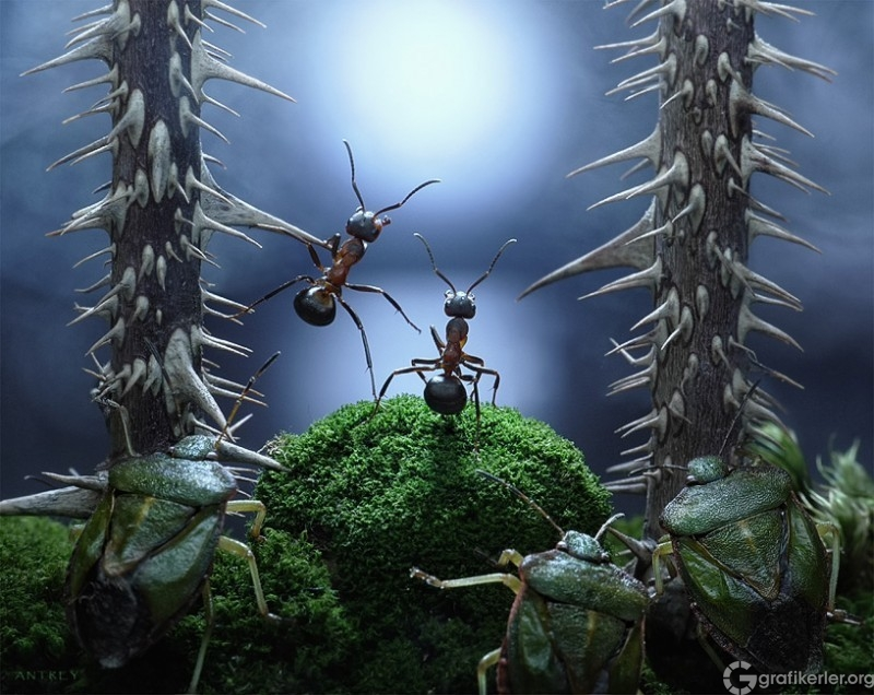 Fantasy-world-of-ants13