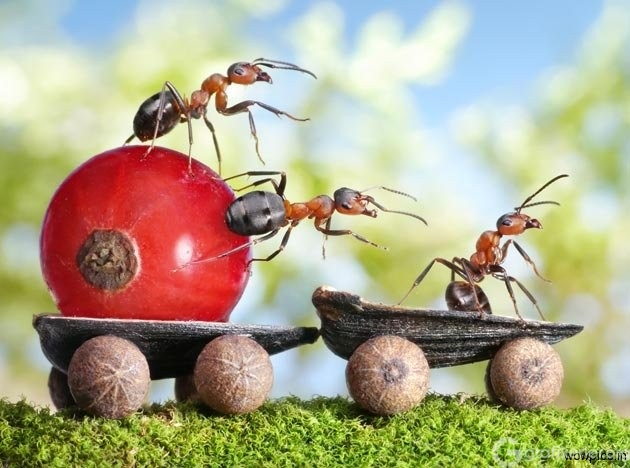 Fantasy-world-of-ants4