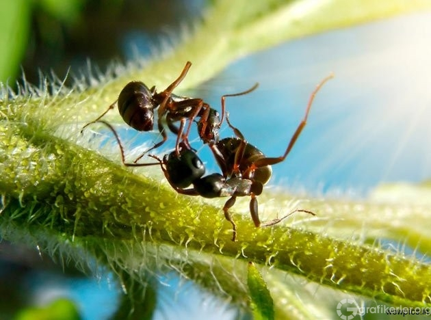 Fantasy-world-of-ants6