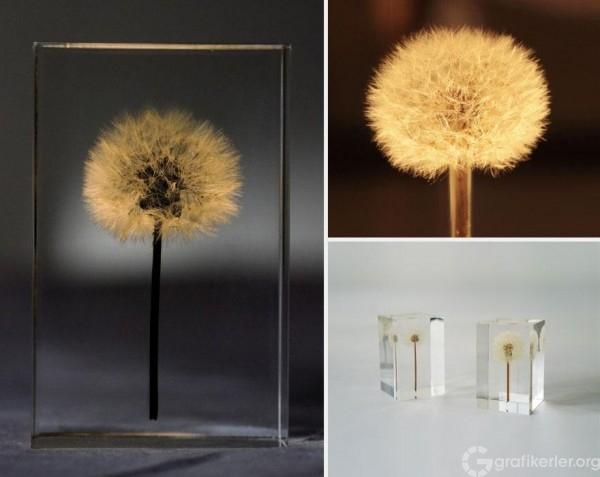 oled-dandelion-lights-takao-inoue-5-600x477