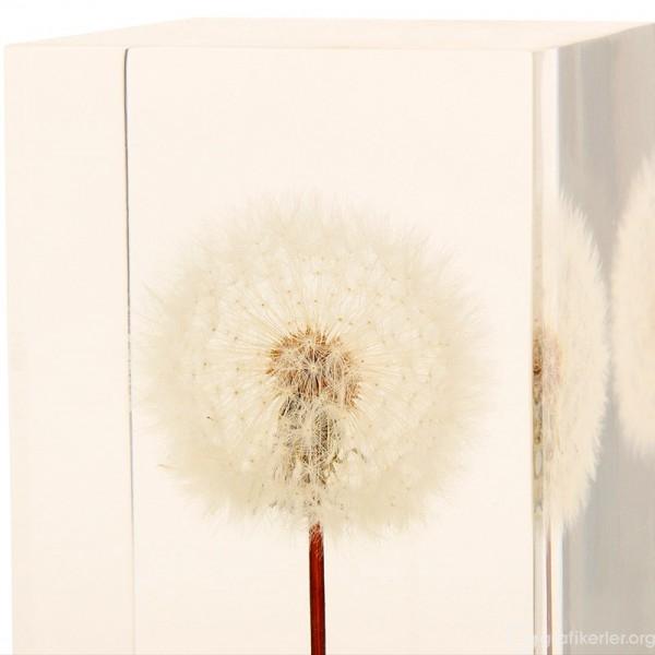 oled-dandelion-lights-takao-inoue-6-600x600